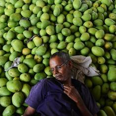 Why would anyone buy a pair of mangoes for Rs 1.74 lakh in Japan?