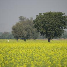 Sangh Parivar groups fighting GM mustard run into a new opponent – Sangh Parivar groups