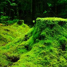 What's behind Japan's moss obsession?