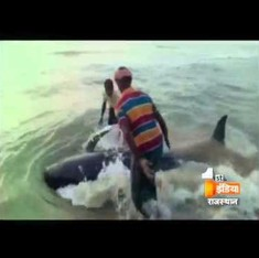 Bizarre footage shows dozens of whales just washing up on Tamil Nadu beach