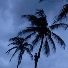 And now, the song: 'Coconut tree is no more tree, Goa government has made history'