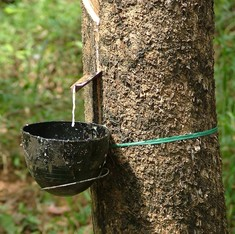 In India, a million rubber farmers are imperilled by cheap imports