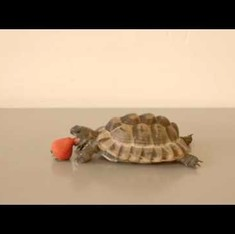 Watch a tortoise munching on a strawberry for a good cause (plus Alan Rickman narrating)