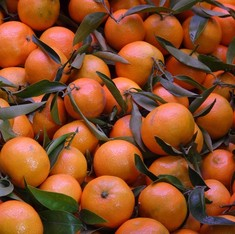 Bhutan's oranges threatened by disease and climate change