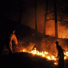 Biodiversity damage: Once dense forests in Kumaon now resemble cremation grounds