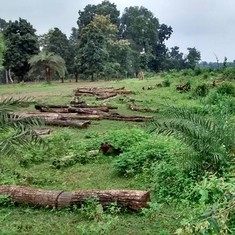 In two years, NDA has cleared 75% of industrial projects in and around wildlife habitats