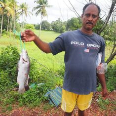 How Goans get around a monsoon ban on fishing (and it's legal and environmentally friendly too)