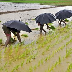 Despite 'normal' monsoon this year, 37% of Indian districts are short of rain