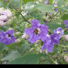 Watch this gorgeous plant flowering after eight years in Maharashtra, the Konkan and Karnatak