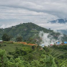 Nepal's million-dollar trees bring hope and fear