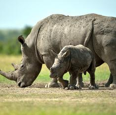 Why wildlife conservation is good for our collective health