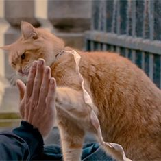 Furry logic: The story of a busker and his adopted cat Bob is perfect movie material
