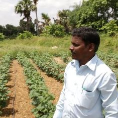 In Karnataka, some farmers are swapping Bt cotton for organic varieties to reduce reliance on water