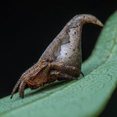 Newly-discovered spider 'sorted' into Gryffindor house from the Harry Potter world