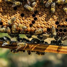 Impure big-brand honey is eating into the margins of small producers