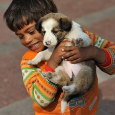 Puppy love at adoption camp for desi dogs in Lucknow