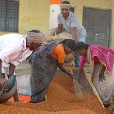 Farmers in Telangana's tur belt don't know whether they should grow the pulse this year