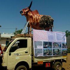 Metal cows and attacks: Ten months since the Una assault, cow politics still stalks Gujarat's Dalits