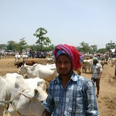 'It has fallen by 75%': How North India's beef hysteria is destroying West Bengal's cattle trade