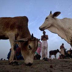 UP police plan to use National Security Act for cow slaughter cases, but don't specify how and when