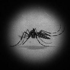 Tamil Nadu reports India's fourth case of Zika
