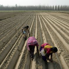 Grassroots innovation? A fertiliser made of curd is reducing farming costs in Bihar