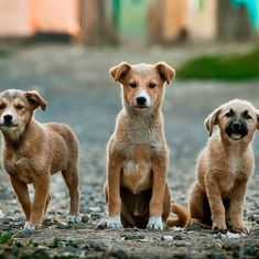 From valuable friends to impure evil: How the Muslim world's opinion of dogs changed