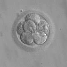 Scientists edit human embryos to remove an inheritable heart condition. Here's how they did it
