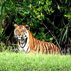 Photos: Finally, an Indian agency has recorded the stunning biodiversity of the Sunderbans