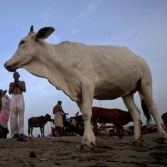 Chhattisgarh: Three arrested for allegedly selling beef