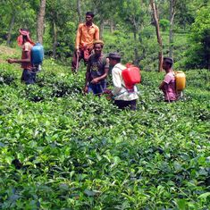 Farmers must use pesticides carefully to prevent poisoning, government panel head tells Firstpost