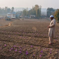 In Kashmir, saffron farmers brace for heavy losses because of a dry spell and lack of irrigation
