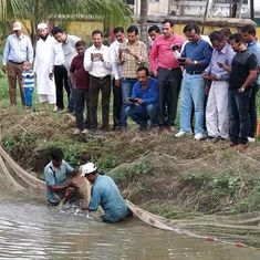 How rearing fish in small ponds is helping farmers boost incomes in Maharashtra
