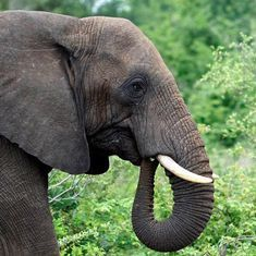 Traders are openly selling illegal wildlife products on e-commerce sites like eBay