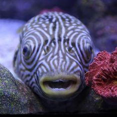 Animal sentience: Never mind the debate, there's plenty of evidence that even fish have feelings