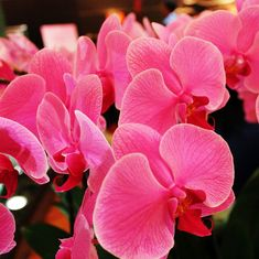 Orchids: India is falling under the spell of the flowers that once inspired Nabokov and Cartier
