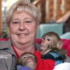 Video: Six monkeys have been adopted by a woman who teaches them how to be like humans