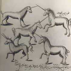 Photos: An 18th-century Persian medical manual commissioned by Tipu Sultan that featured unicorns