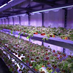 Urban farmers are learning to grow food without soil or natural light