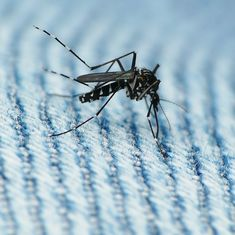 Emoji power: A new mosquito emoticon may help battle diseases like dengue