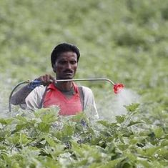 Draft Bill on regulating pesticides could punish farmers who use spurious products, experts fear