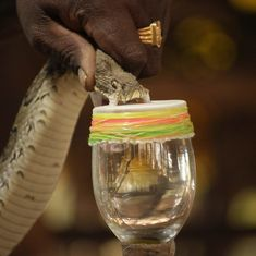 India faces double the sting of snakebites as anti snake venom supply runs short, efficacy drops