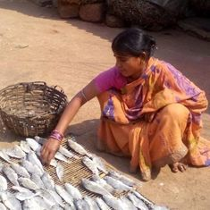 As catch declines, Chilika fishers are forced to become migrant labourers