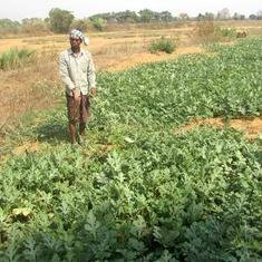 How cultivating watermelon has changed lives of poor villagers in Odisha's hunger belt