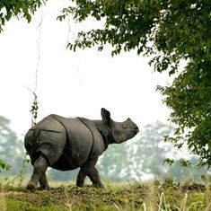 In West Bengal's Jaldapara, reformed poachers are helping crack down on rhino horn trade