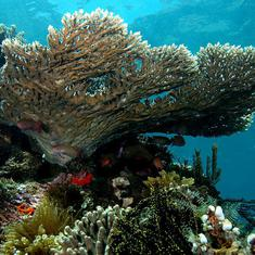 Bleached corals in Gulf of Mannar are starting to recover – but overfishing poses a fresh challenge