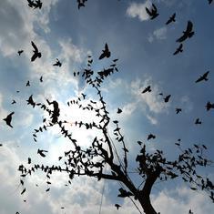 Delhi breathes easier as rain makes air quality 'satisfactory'