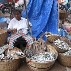 Formalin scare: Goa government bans import of fish from neighbouring states till July-end