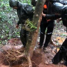 A group of youngsters is turning a 'sacred grove' in Western Ghats into a biodiversity-rich zone
