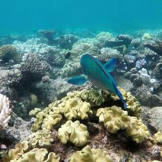 The Great Barrier Reef has survived bleaching over centuries – but it's getting worse
